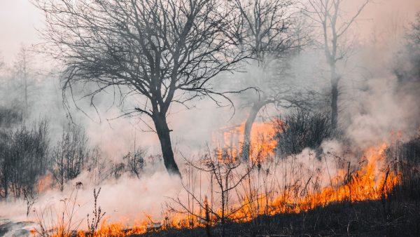 Φωτιά-μαμούθ: Οι 3 λόγοι που τα αεροπλάνα αντιμετωπίζουν ανυπέρβλητες δυσκολίες στην Εύβοια