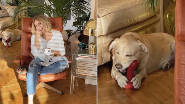 Σμαράγδα Καρύδη | H αριστουργηματική απάντηση για τη φωτογραφία με τον σκύλο της και το υποτιθέμενο ερωτικό βοήθημα (Pic)